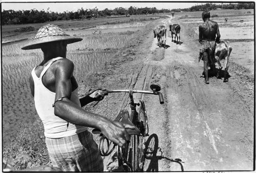 Rural rickshaw puller