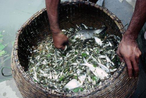 Fishing in village tank