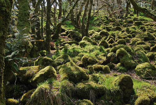 Ty Canol woods