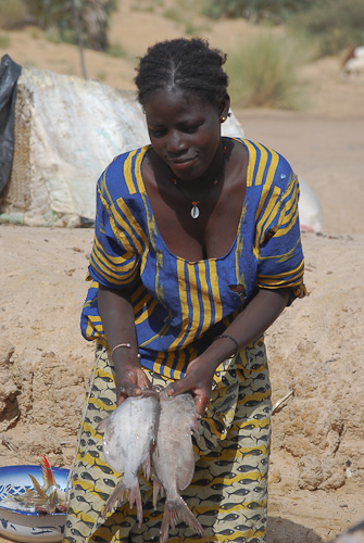 Fish seller on the bank of the Niger, Mali