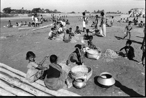 Sandwip island, Bangladesh, children peeling prawns