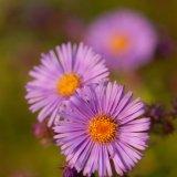 Flowers-5