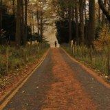Roads-41