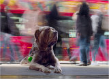 Runner Up, Waiting at Barkers by Mike Spurway