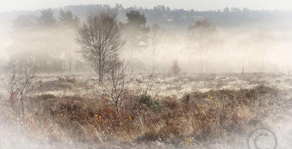 Misty Morning on Cannock Chase1