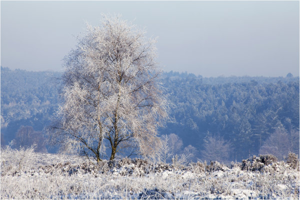 Cannock Chase in Snow 4