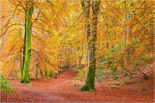 Autumnal 1