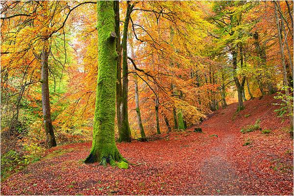 Autumnal 2
