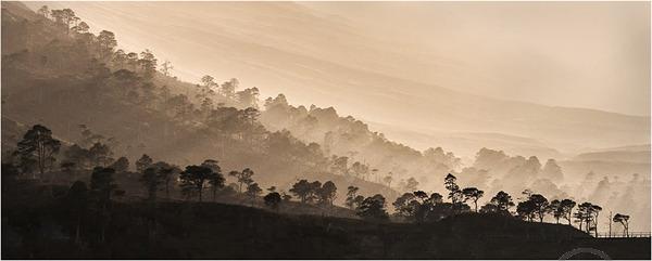 Backlit Vista Glen Affric