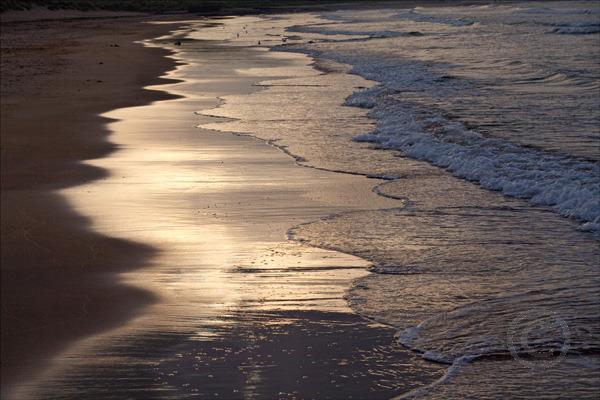 Beach Lines