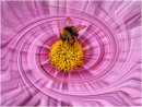 Bee in a Spin