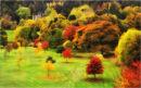 Colours of Autumn 2