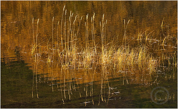 Lake and Grasses