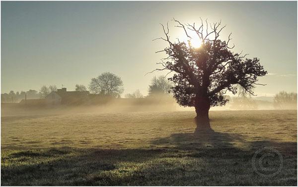 Tree In Morning Mist