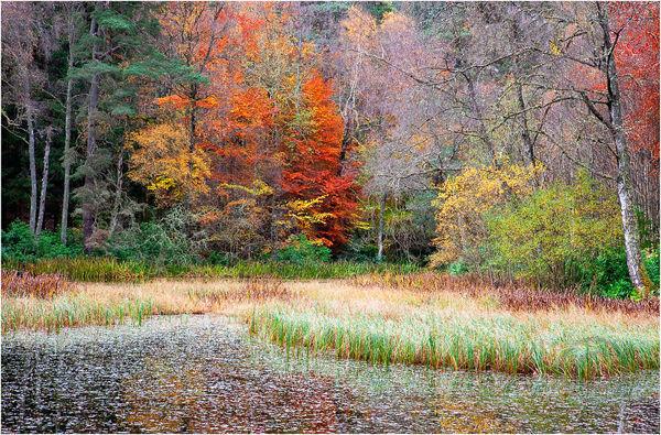 Loch Dunmore Autumn 3