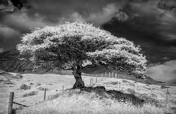 Loan Tree Skye