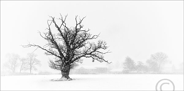 Tree in Snowstorm