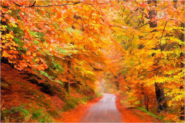 Perthshire Lane in Autumn