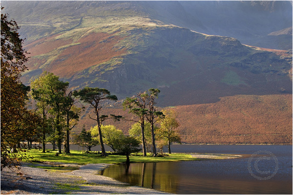 Pines on Buttermere Shoreline