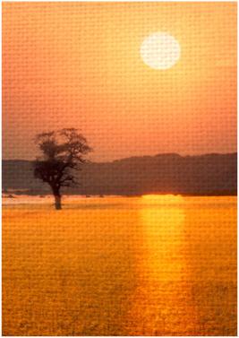 Rapefield Sunset