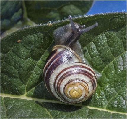 Snail 1