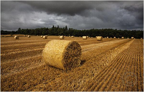 Approaching Storm - Lowland Corn Field