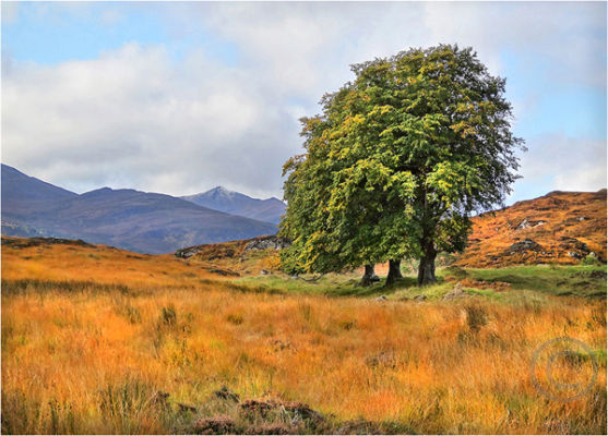 Trees in Glen Affric