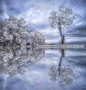 Tree Reflections Blue