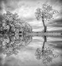 Tree Reflections Mono