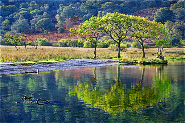 Trees Reflected in Crummock Water