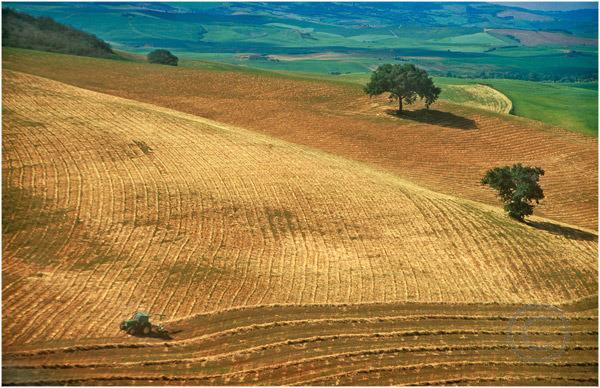 Tuscan Field
