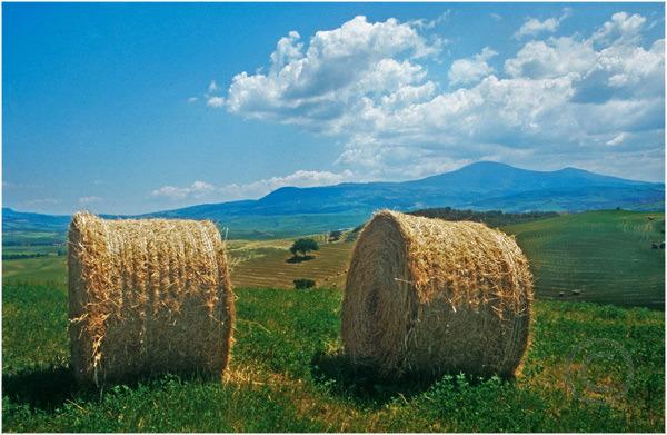Tuscan Field 2