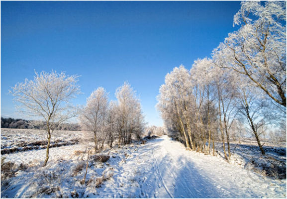 Winter on Cannock Chase