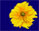 Yellow Against Blue