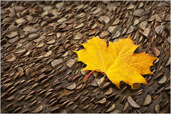 Autumnal Leaf on Money Log
