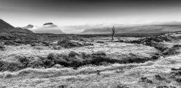 The Dead Tree of Rannoch Moor and Buachaille Etive Mhor