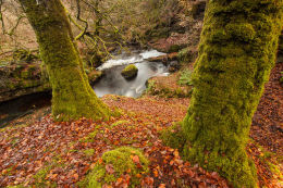 The Moss Trees