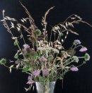 FV011 Wildflowers