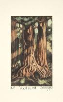 American Redwood
