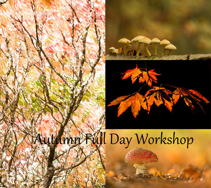 Autumn Full Day Workshop