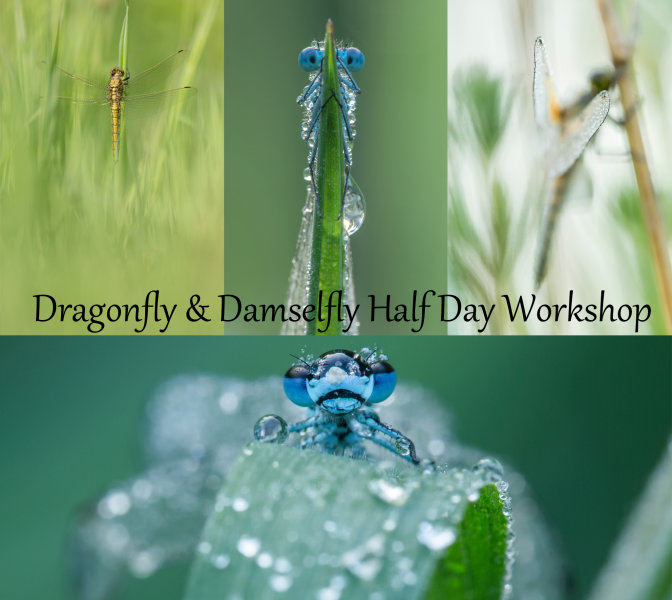 Dragonfly and Damselfly Early Morning Half Day Workshop