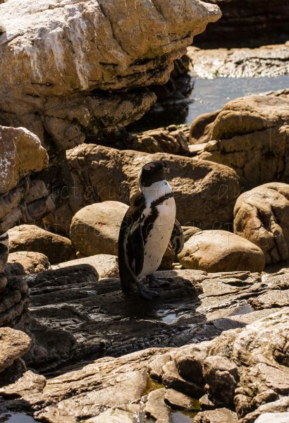 Even Penguins Need Shade