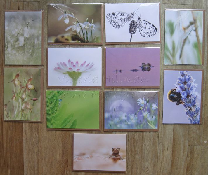 Forgotten Little Creatures Card Collection