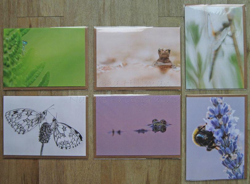 Forgotten little Creatures Wildlife Cards