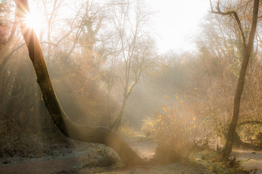 Frosty Morning - Frosty and cold morning at Vallis Vale in Frome
