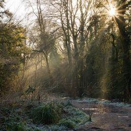 Frozen Woodland