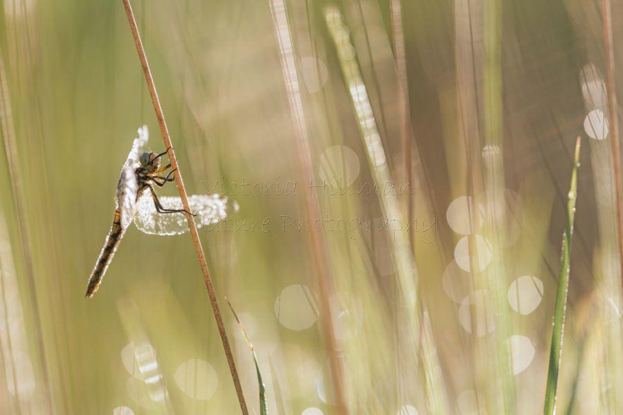 Grassland Sparkles
