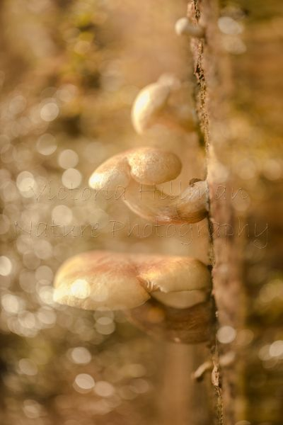 Magical Fungi