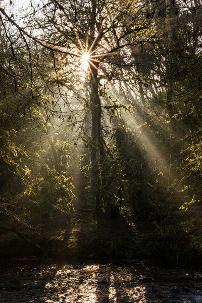 Mythical Woodlands