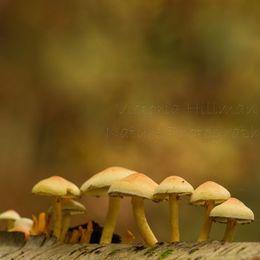 Painted Fungi
